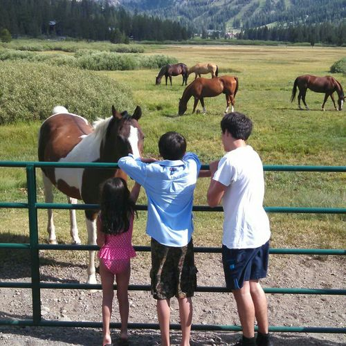 Making Friends Animallover Naturelover Myfamily Favorite Picture From 2014 Summertime Kirkwood California Saying Hello Hi Horsie Beautiful Friendly God Creation Love Memories NoEdits  Capture The Moment Travel What I Value