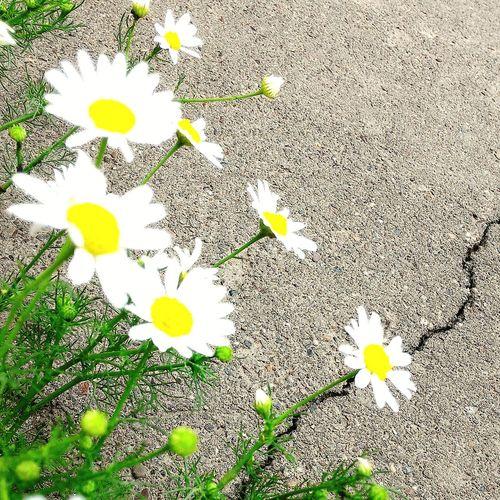Вот оно-стремление к жизни цветокизкамня