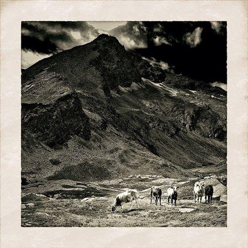 #cows with #Mountains | #swiss #bestoftheday #all_shots #nature #snapseed #camera+ #jj #jj_forum #mountain #sky #blackandwhite #bnw #bw #monochrom #noir #simplyb&w #blancoynegro #baw #blacknwhite Cows Bw Mountain Blacknwhite Swiss Bnw Monochrom Snapseed Blancoynegro Nature All_shots Camera Bestoftheday Noir Baw Mountains Jj  Blackandwhite Jj_forum Sky Simplyb