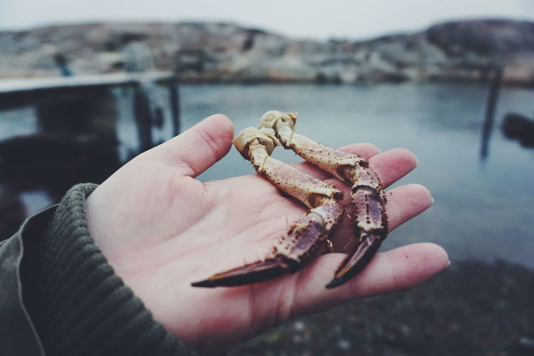 Close-up of hand holding crab scissors