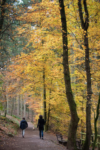 Rear view of people walking on autumn trees