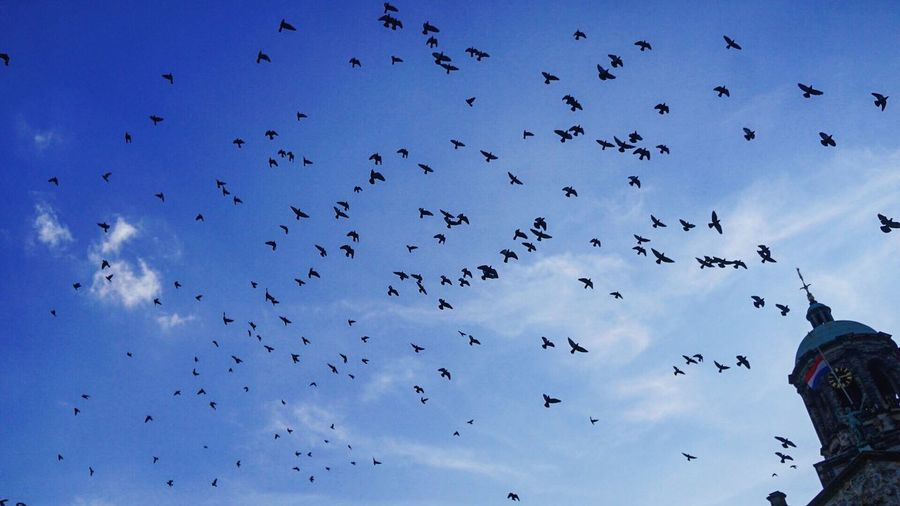 Low Angle View Of Silhouette Birds Flying In Blue Sky