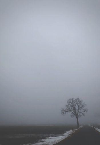 Tree Sky Beauty