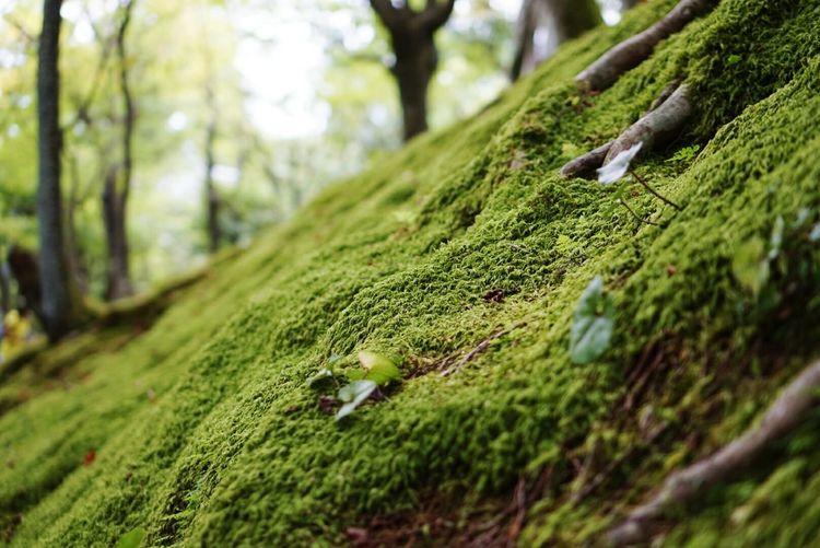 Praying Peace And Love Beautiful Day Green Enjoying The Sun Relaxing Time Beautiful Relaxing Kyoto Japan