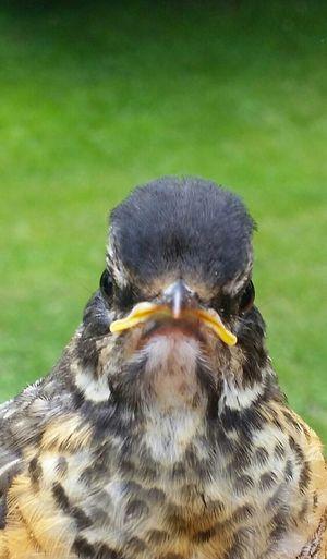AngryBird Angry