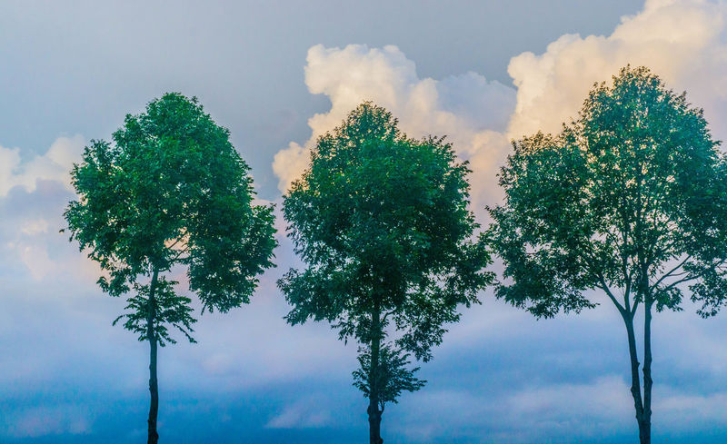 3 Trees Beauty In Nature Blue Background Blue Sky Cloud - Sky Day Green Green Tree Growth Low Angle View Nature No People Outdoors Sky Small Tree Three Trees Tree Tree And Sky Tree Art Tree Tops And The Sky Tree Trunk Trees White Clouds White Clouds And Blue Sky White Sky