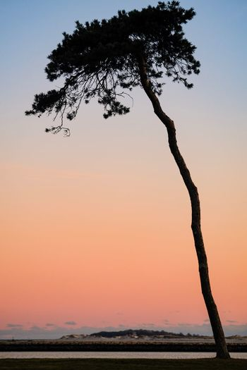 Lean in Plymouth Massachusetts Plymouth Harbor Plymouth Tree Sky Plant Sunset Tranquility Beauty In Nature Nature Orange Color No People Branch Landscape