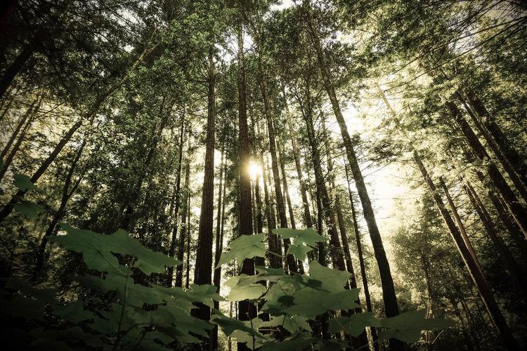 Forest Photography Tall Trees Fujinon18mm F2 R FUJIFILM X-T1 Fujifilm_xseries EyeEm Best Shots Nisene State Park