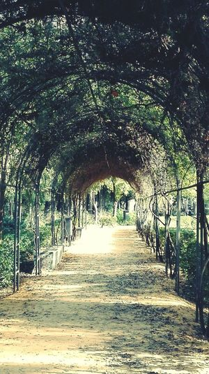 Parc in Sevilla Tree Nature Day Outdoors The Way Forward No People Beauty In Nature Growth Architecture Garden Sun Freshness Beautiful Nature Nature Photography Park Beauty In Nature Nature Tree Plant Trees Footpath Long Goodbye