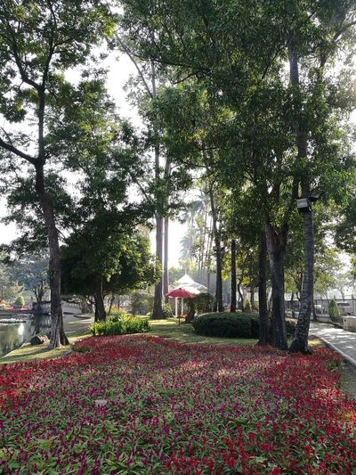 Chiang Mai   Thailand Morning Freshness Tree Flower Sky Plant Grass Garden Park EyeEmNewHere