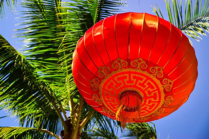Happy new year chinese! -Honolulu, Oahu Hawaii. Red Chinese New Year Cultures Chinese Lantern Tree Sky Nature Close-up Day Palm Tree No People Chinese Lantern Festival Outdoors Lantern Travel Photography Eyeemnew EyeEmNewHere Eyeamfeeling Eyeem Market Happy New Year Chinesenewyear Oahu / Hawaii Oahu Oahu, Hawaii Nature_collection