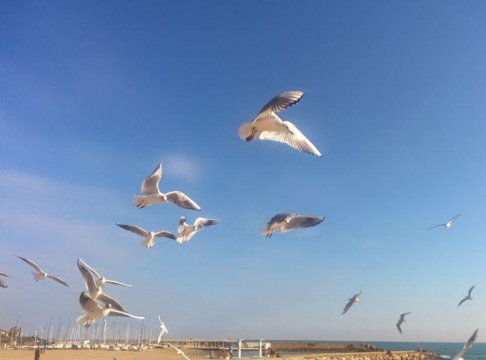 Volando voy Outdoors Nature Sea And Sky Sitges Barcelona España