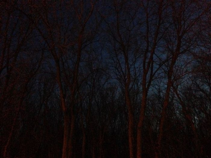 Low angle view of bare trees
