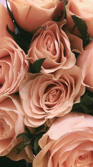 Maybe chivalry isnt dead. Pretty Pink Roses Chivalry Flowers Nature