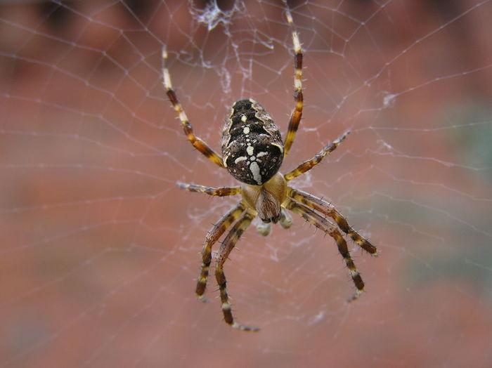 Animal Leg Animal Themes Animal Wildlife Arachnid Close-up No People One Animal Spider Spider Web Spinning Web