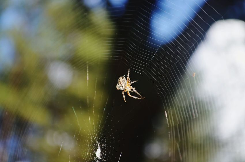 Spider Nature Nature_collection Forest Spidersweb Moments Photography Web Arachnids Random