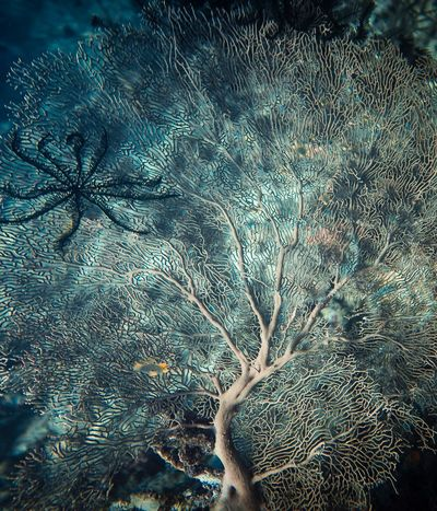 It's a tree in the sea .It's a flower in the bottom of the sea Full Frame Nature No People Water Day Pattern Close-up Backgrounds Plant Outdoors Abstract Beauty In Nature Growth Low Angle View Blue Tree Underwater