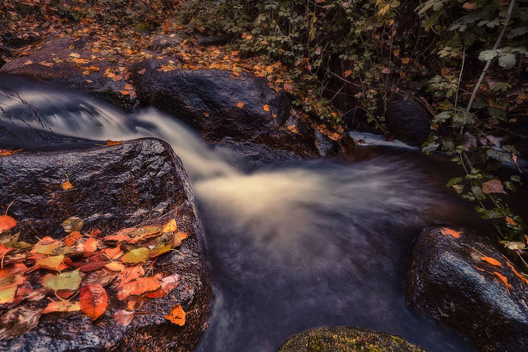 View of autumn leaves on rock