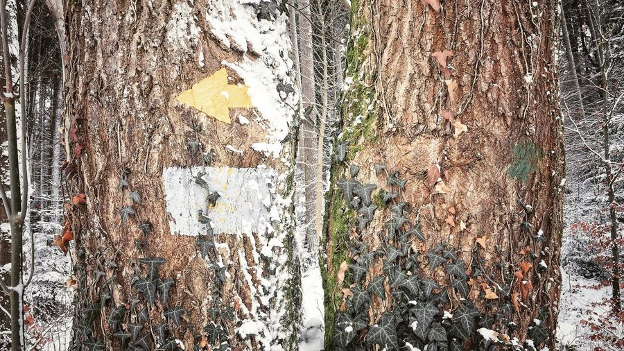 Photography Photographer Photo Phone Photography Pictureoftheday Picoftheday Winterphotography Winter Wonderland Naturephotography Day Tree Trunk No People Outdoors Textured  Winter Snow Cold Temperature Nature Backgrounds