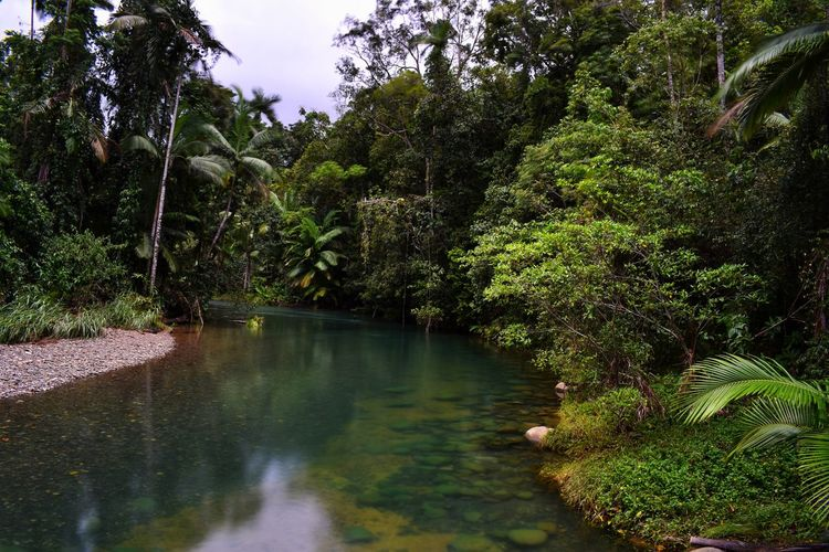 Plant Tree Water Nature Forest Growth No People Tranquility Beauty In Nature Green Color Lake Scenics - Nature Land Foliage Tranquil Scene Lush Foliage Outdoors Day Environment
