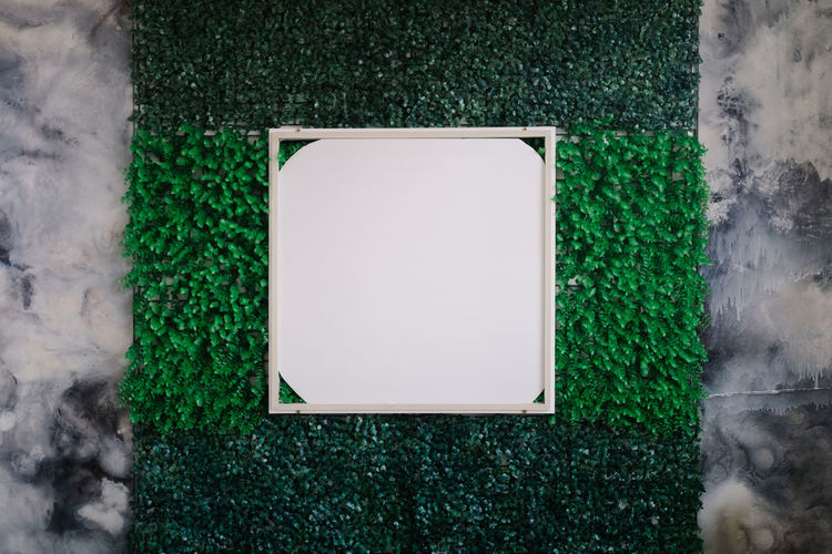 High angle view of green plant on wall