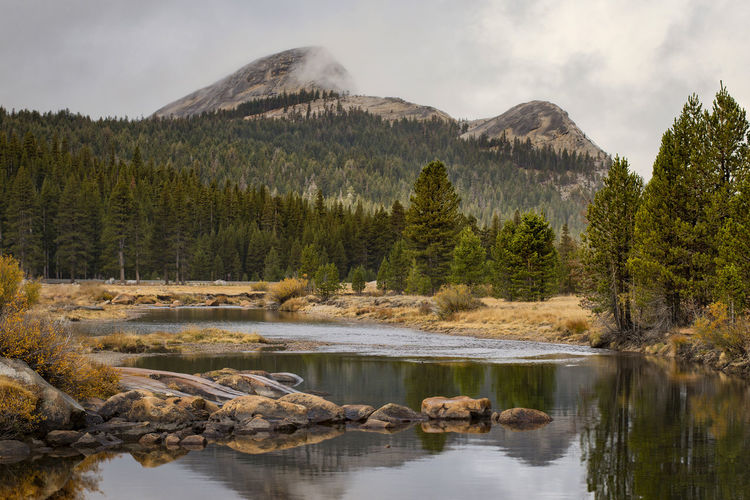 Tuolumne Meadows Water Tree Mountain Beauty In Nature Scenics - Nature Sky Tranquil Scene Tranquility Reflection Nature No People Cloud - Sky Waterfront Forest Yosemite National Park Tuolumne Meadows River Rocks Landscape Wilderness Area National Park California