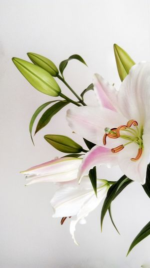 Colour Of Life Flowers Lilies Lily Romantic Gift Bouquet Nature