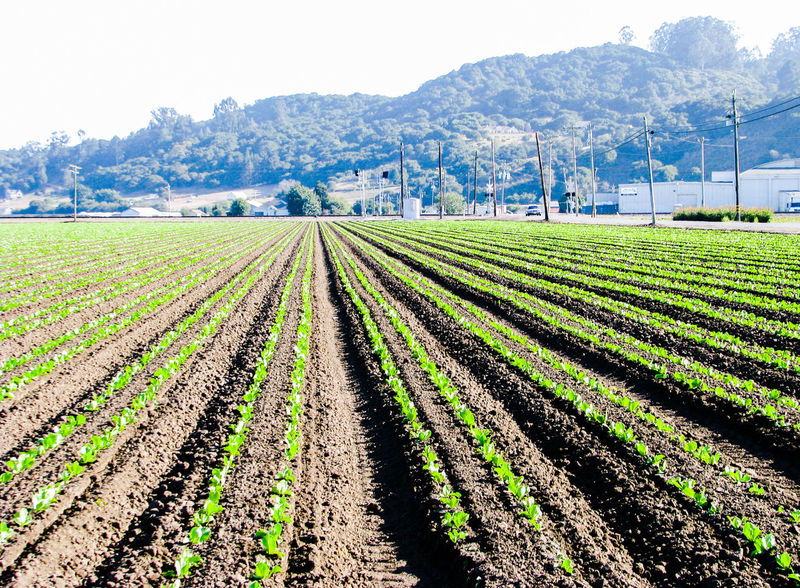 Agriculture Growth Field Rural Scene Nature Scenics Vegetable Garden Farm Cultivated Outdoors Landscape Mountain Beauty In Nature Plant Green Color Beauty Winemaking Tree Art Is Everywhere The Secret Spaces San Francisco Rural Rural Landscape Strawberry Farm Freshness