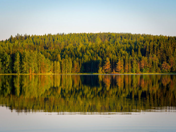 Beauty In Nature Day Forest Lake Land Nature No People Non-urban Scene Outdoors Plant Reflection Reflection Lake Tree Water Waterfront