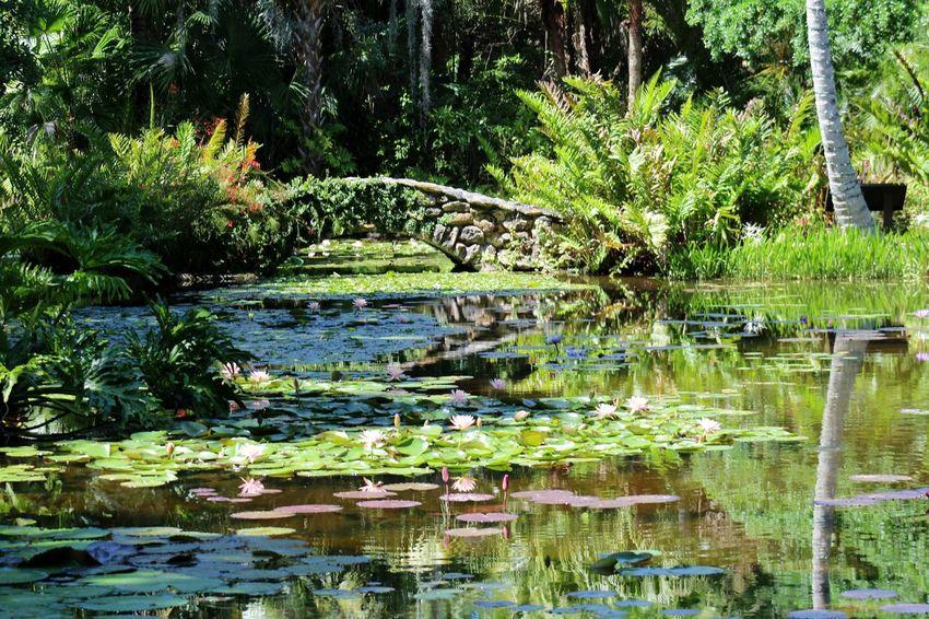 Flowers,Plants & Garden Waterscape Waterlilypond Waterlilies Flower Collection Flowerporn Flowers, Nature And Beauty Nature_collection Beauty In Nature Beautiful Nature