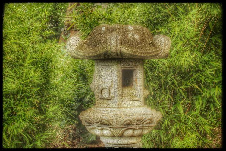 Japanese Garden Lady Dixon Park Belfast Nature Photography Nature On Your Doorstep Pagoda Japanese  Woodland Walk Showcase: February Bamboo Bamboo Background Bamboo Shoots Zen Love Japanese Culture EyeEm Gallery Backgrounds Background 🍃Green🍃