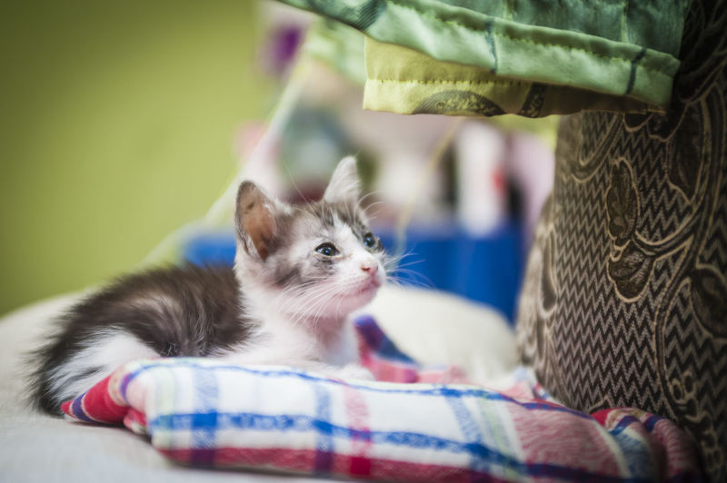 Cute Kitten Relaxing On Sofa At Home