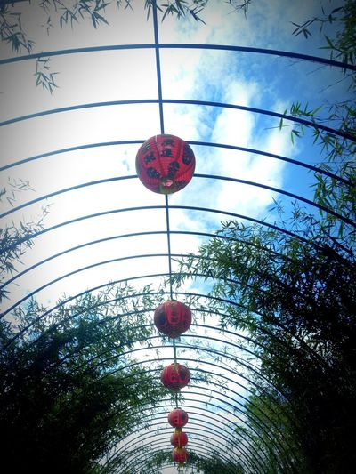 red lantern China China New Year Imlek Rainbow Colorfull City Citylife EyeEmNewHere Cloud Cities Colour Your Horizn Mobility In Mega Cities Red Redlantern Low Angle View Hanging Lantern Sky Day Tree