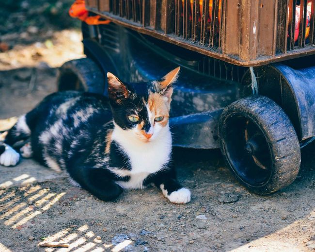 Close-up of cat by lawn mower