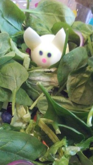 Indoors  No People Close-up Egg Easter Salad Fragility Freshness Green Color Day Leaf HardBoiledEggs Mouse🐹 Nature Green Color Animal Themes Foodartist