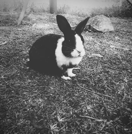 As lost as Alice👑 as mad as the Hatter🎩Tortoise Hare Thetortoiseandthehare Bunny  Blackandwhite Perspective Animals Nature Aww Alice Wonderland Upclose  Rabbit Fast Vs Slow Hatter Lost Mad