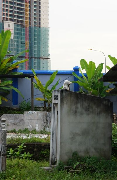 life goes on Ruins EyeEmNewHere Cat Residential Building Modern Pipe - Tube Grass Building Exterior Architecture