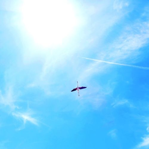 Flying Sky Blue Outdoors Nature Beauty In Nature One Animal Flamingo Flamant Rose SouthFrance