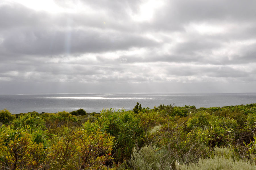 Stormy skies over the Indian Ocean with lush plants at Cape Naturaliste headland in Western Australia. Beauty In Nature Cape Naturaliste Coastal Coastline Day Dunes Geographe Bay Green Growth Horizon Over Water Indian Ocean Landscape Lush - Description Nature Plants Scenics Sea Seascape Sky Stormy Sunlight Travel Destinations Tree Uncultivated Western Australia