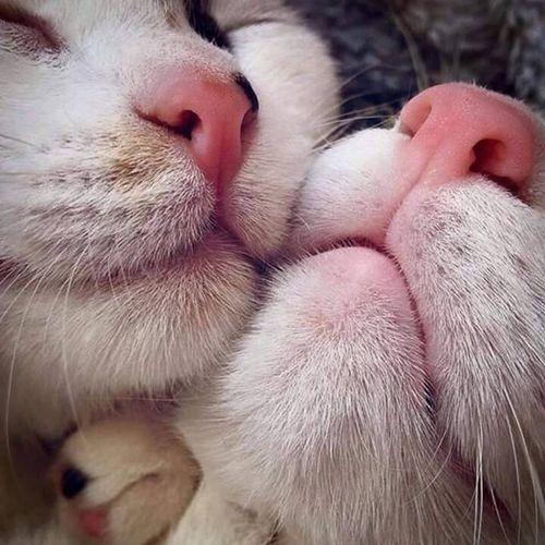 Domestic Cat Domestic Animals Mammal Eyes Closed  Pets Animal Body Part Feline Day Love