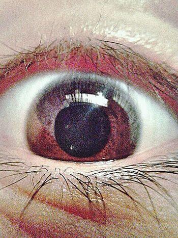 Brown Eyes Moreno Looking At Camera Macroshot
