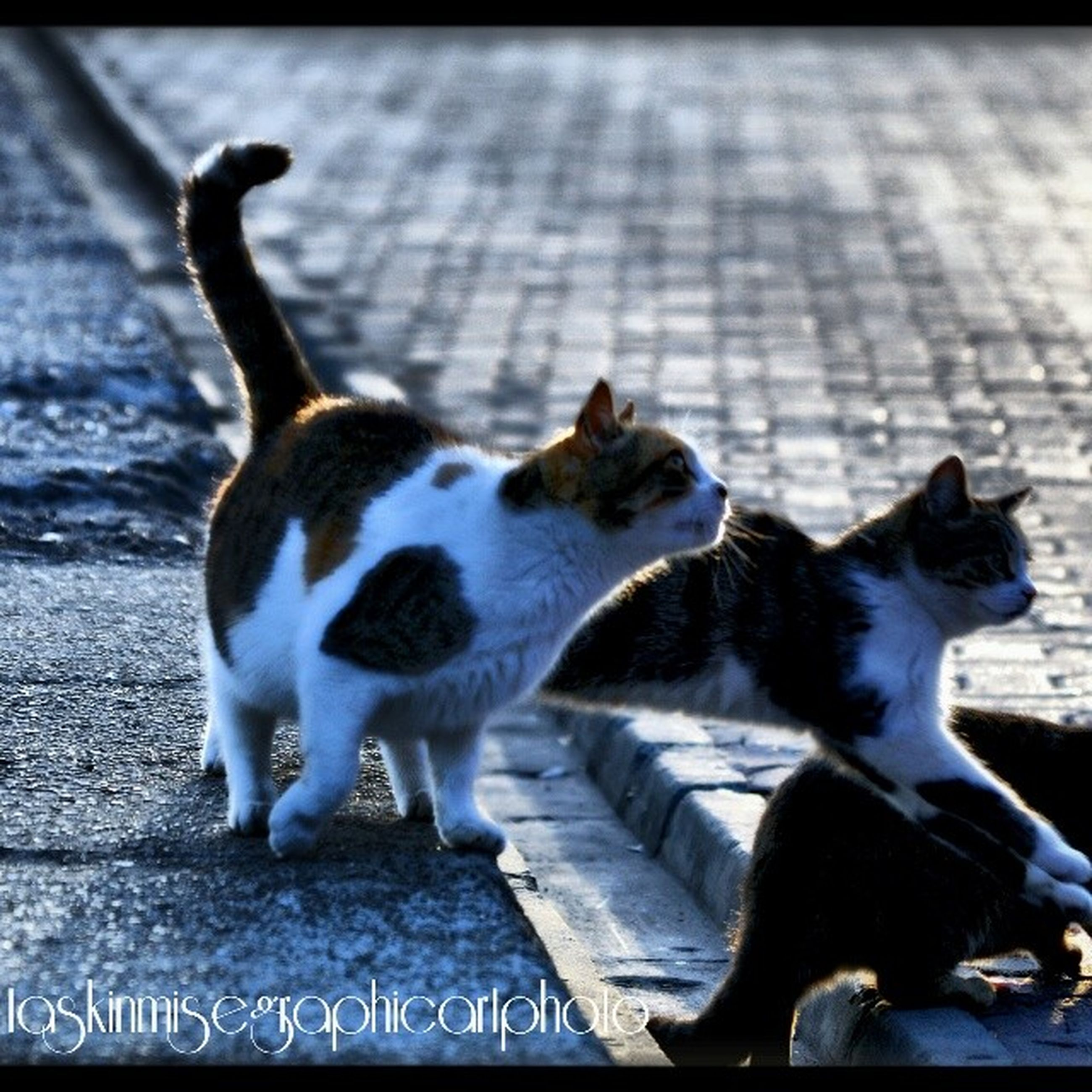 animal themes, domestic animals, mammal, pets, one animal, domestic cat, cat, two animals, feline, full length, portrait, dog, looking at camera, sitting, outdoors, day, relaxation, transfer print, zoology, stray animal