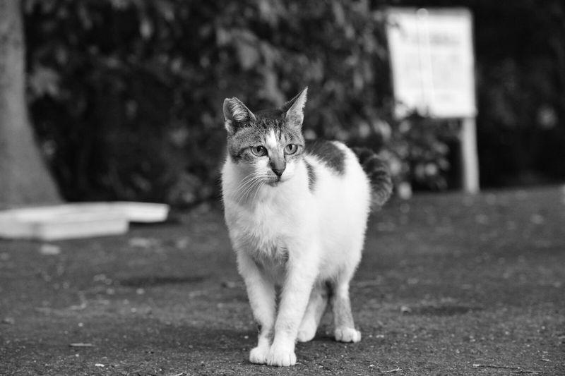 おすまし中 Playing With The Animals Stray Cat KAWAII Monochrome