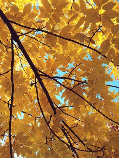 IPS2015Fall Autumn Colors Fall Beauty Fall Autumn Leaves Autumn🍁🍁🍁 Autum Autumn 2015 Autumnbeauty Showcase: November