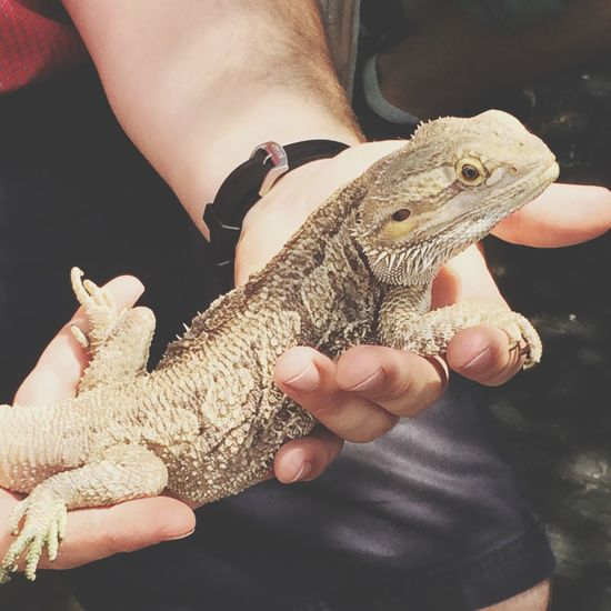 Cute guy at the zoo c: Bearded Dragon Zoo