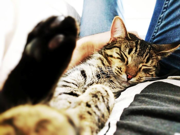 Close-up of hand with cat