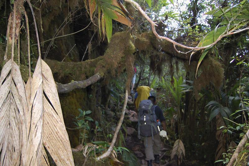 Roraima Tropical Forest Tropical Forest Venezuela Mountain Nature Roraima Tepuy