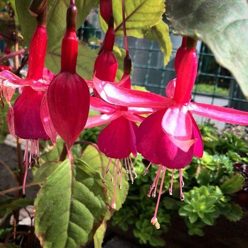 I love my Garden ... Flower Nature Zahrada Kvety