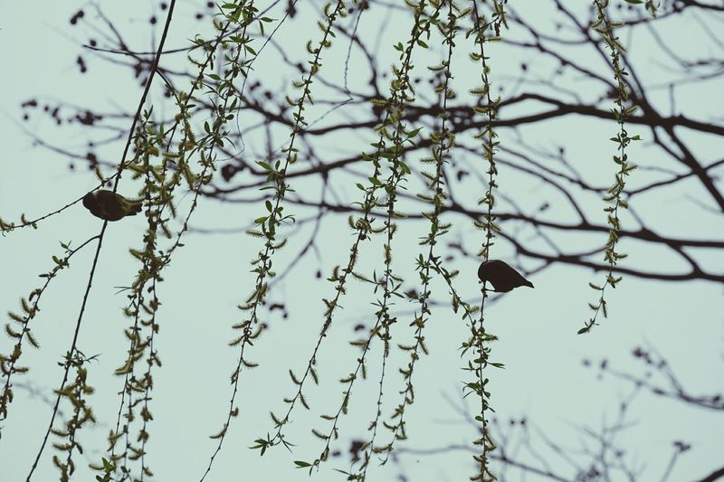 Plants 🌱 Spring Is Coming  EyeEm Best Shots - Nature NATReview From My Point Of View Birds_collection Birds Of EyeEm  Willow Lake View Enjoying Life