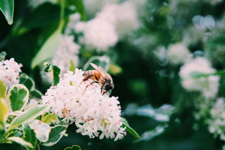 Animals In The Wild Flower Animal Wildlife Flowering Plant Invertebrate Animal Themes Insect Close-up Focus On Foreground Flower Head Growth Vulnerability  Freshness Bee Beauty In Nature Plant Petal One Animal Animal Fragility